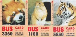 Série Complète De 3 Cartes Japon ANIMAUX - MARMOTTE TIGRE PETIT PANDA - LOT Japan Animal Cards - Tiere Karten - Phonecards