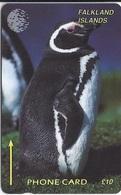 FALKLAND ISLANDS - JACKASS PENGUIN - 1CWFB - Falklandeilanden