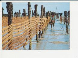Mytiliculture Parcs à Moules Photo De Michel Pottier 68/29 - Pêche