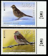 2019 - LUSSEMBURGO / LUXEMBOURG - EUROPA  CEPT - UCCELLI / BIRDS - SET COMPLETO. MNH. - 2019