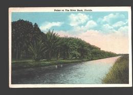 Florida - Palms On The River Bank - Etats-Unis