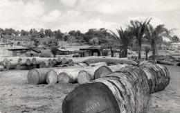 ANGOLA-ESPLOTAZIONE LEGNA-1959 - Angola
