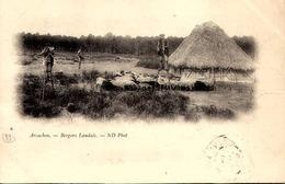 [33] Gironde >   ARCACHON / BERGER  LANDAIS / - Arcachon