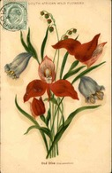 FLORE - Carte Postale  - Fleur D 'Afrique Du Sud - L 29688 - Flowers