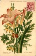FLORE - Carte Postale  - Fleur D 'Afrique Du Sud - L 29689 - Flowers