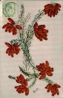 FLORE - Carte Postale  - Fleur D 'Afrique Du Sud - L 29691 - Flowers