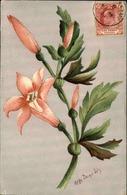 FLORE - Carte Postale  - Fleur D 'Afrique Du Sud - L 29693 - Flowers