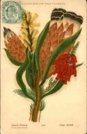 FLORE - Carte Postale  - Fleur D 'Afrique Du Sud - L 29694 - Flowers