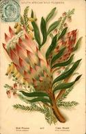 FLORE - Carte Postale  - Fleur D 'Afrique Du Sud - L 29695 - Flowers