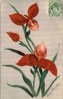 FLORE - Carte Postale  - Fleur D 'Afrique Du Sud - L 29696 - Flowers