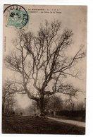 76 *  NORMANDIE * ELBEUF * ARBRE * CHENE DE LA VIERGE * Paul DUVAL - Trees