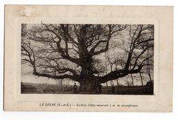 28 * ARBRE * LA LOUPE * LE GROS CHENE 7m Circonférence* - Trees
