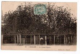 29 * ARBRE * ROSCOFF * LE GRAND FIGUIER * Ballière éditeur - Trees