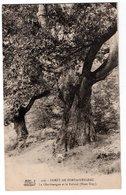 SEINE & MARNE * FORET DE FONTAINEBLEAU * LE CHARLEMAGNE & LE ROLAND (MONT USSY) * 119 - Trees