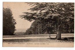 SEINE & MARNE * FORET DE FONTAINEBLEAU * LE CEDRE DU MAIL * 213 - Trees