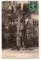 SEINE & MARNE * FORET DE FONTAINEBLEAU * LE PHARAMOND * 46 - Trees