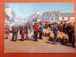 -Corlay-jour De Foire-Marché-moutons- - France