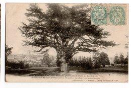 SEINE & MARNE * MONTIGNY-LENCOUP * CEDRE * BERNARD JUSSIEU En 1734 * Simonet, Bray Sur Seine - Trees