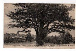 SEINE & MARNE * MONTIGNY-LENCOUP * CEDRE * BERNARD JUSSIEU En 1734 * PARC DE M. TRUDAIRE - Trees