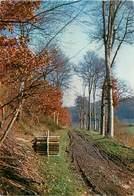 CPSM Paysage-Chemin D'Automne              L2853 - France