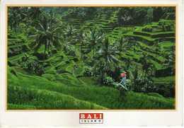 Indonesia Bali Postcard Via Macedonia - Stamps:1994 The 6th Five-Year Plan.medicine - Indonesia