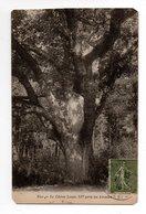 YVELINES * BUC * LE CHENE LOUIS XIV Près Des ARCADES * - Trees