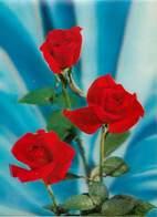 Fleurs - Roses Rouges - Carte Relief - Semi Moderne Grand Format - 2 Scans - état - Flowers