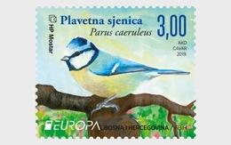Bosnië & Herzegovina / Bosnia - Postfris / MNH - Complete Set Europa, Vogels 2019 - Bosnië En Herzegovina