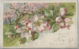 CPA - FLEURS - Carte Illustrée - Edition K.V.i.B - Flowers