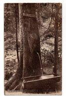 VOSGES * GERARDMER * LES PERLES DE VOLOGNE * SOURCE DANS UN SAPIN * 3014 - Trees