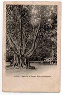ALGER * JARDIN D'ESSAI * UN CAOUTCHOUC * B.F., Paris - Trees