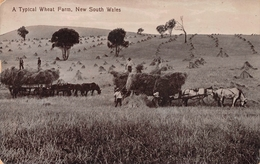 A Typical Wheat Farm New South Wales AUSTRALIA - Australie