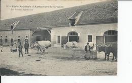 GRIGNON    Ecole D'agriculture Les Boeufs A L'abreuvoir - Grignon