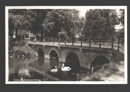 Goes - Ganzepoortbrug - Zwaan / Cygne / Schwan / Swan - 1950 - Goes
