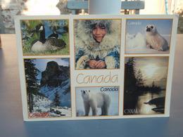 Cp Canada  Multivuesours Blanc, Phoque Oie.... - Canada