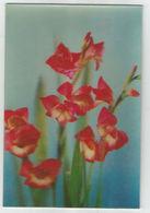 Trójwymiarowa Lenticulaire 3D - Kwiaty Flowers - Flowers
