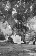 "The White Men""s Tree Trincomalee Ceylon SRI-LANKA - Sri Lanka (Ceylon)"