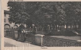 Cartolina - Postcard / Viaggiata - Sent /  Saluti Da Treviso. - Treviso
