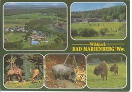 AK-30831  -   Bad Marienberg - Westerwald - Wildpark  - Mehrbild (5) - Bad Marienberg