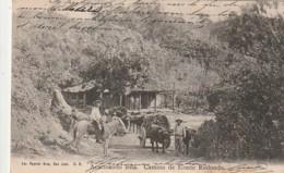 *** COSTA RICA ***  -  Acarreando Lena-Camino De Monte Redondo Timbre Décollé -sinon  TTB - Costa Rica