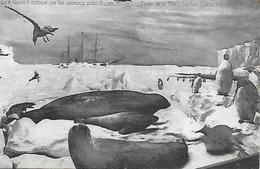 """Expédition Polaire En Antarctique Explorateur Allemand Drygalski  """" Navire Le Gauss"""" Entouré D' Animaux Antarctiques - Missions"""