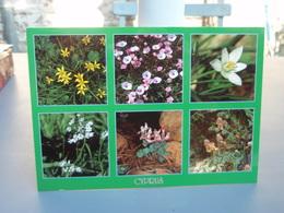 "Cp Cyprus  "" Lilies Of The Field "" 2 Timbres Non Oblitérés Fleurs - Cyprus"