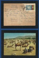 Afghanistan 1969 Postal Used Postcard Stockyard Ghaznee Camel Picture View Card - Afghanistan