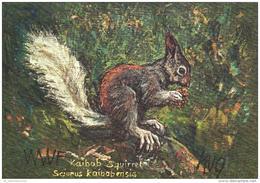 Tiere / Kunst / Zeichnung: Eichhörnchen (D-A226) - Tierwelt & Fauna