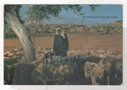 PALESTINE - CP ANIMEE THE SHEPHERD'S FIELD BETHLEHEM - I. AMAD N° 29 - CIRCULEE EN 1978 - Palestine