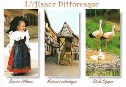 Alsace Pittoresque Divers Aspects (2 Scans) - Alsace