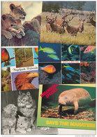 Lot / Konvolut / Sammlung: 100 Ansichtskarten Tiere / Animals (L-C-010) - 100 - 499 Karten