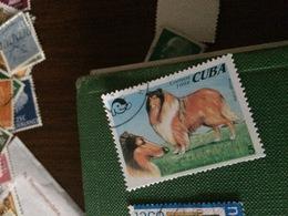 CUBA IL CANE - Francobolli