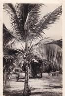 AFRIQUE.  FORT ARCHAMBAULT (ENVOYÉ DE). CAMEROUN .COCOTIER. TEXTE ANNÉE 1949 - Cameroon