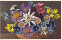 AN95 Alpine Flowers - Thor & Gyger Postcard - Flowers
